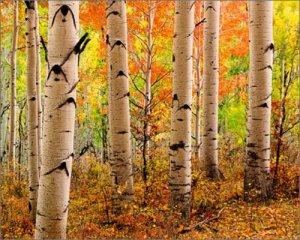 Jeff_Mitchum_Princes_Of_Autumn_Durango_Colorado